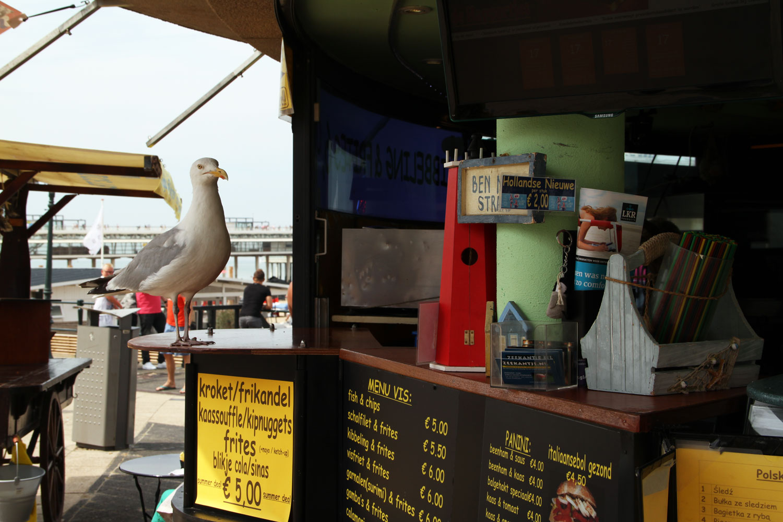 scheveningen holland strand urlaub stadt möwe fressen fressack