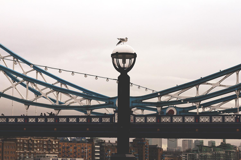 London, tourist, tourismus, england, großbrittannien, city trip, hauptstadt, städtereise, tower bridge, möwe