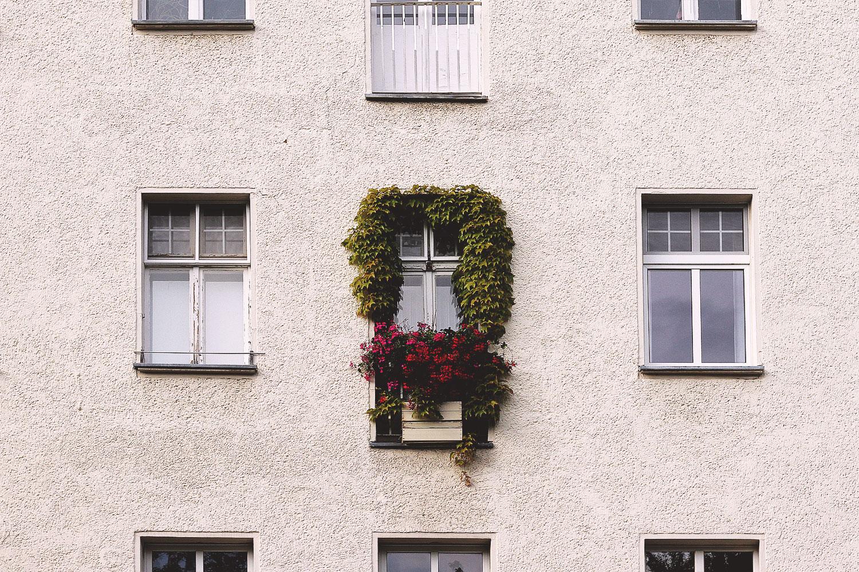 fenster, blumen, pflanzen, berlin